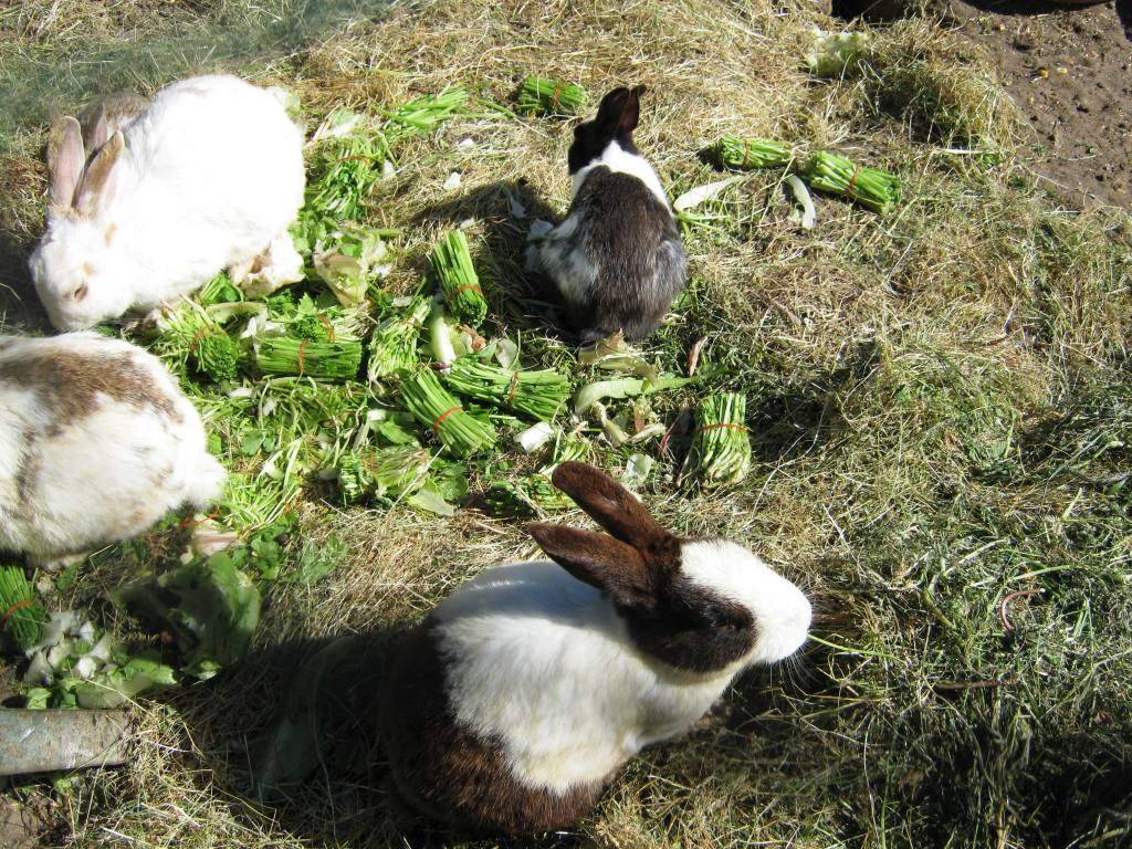Carpi Farm Petting Zoo Dalaman Hilton