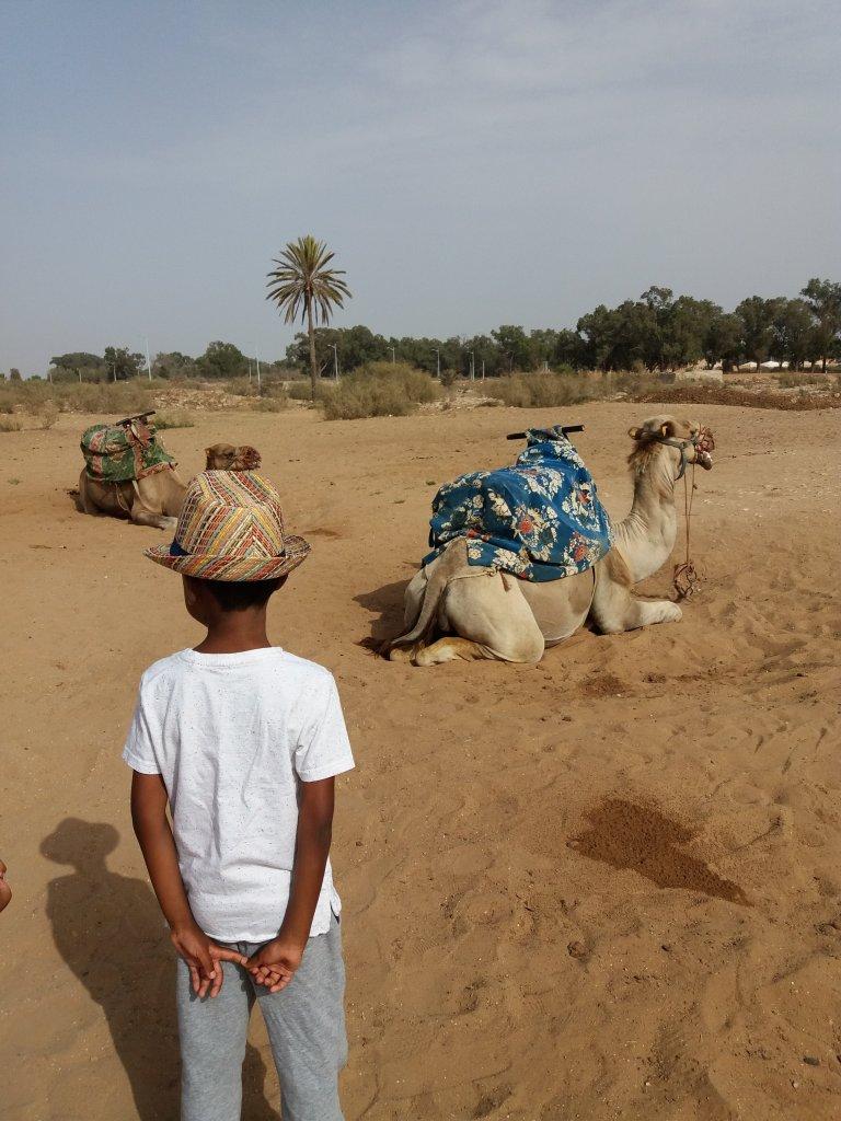camel ride agadir