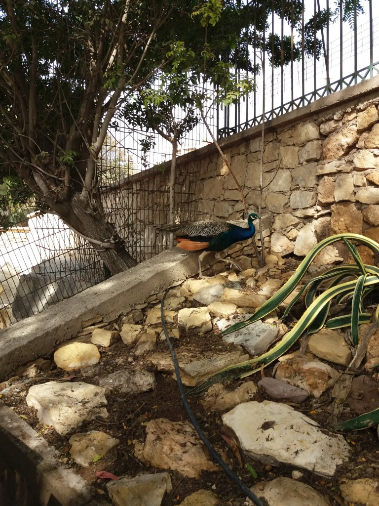 valley of the birds Agadir